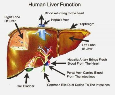 http://3.bp.blogspot.com/-yuWTJj5GkCk/U4hq4oGTjMI/AAAAAAAAGww/b1kHW7Jq1WQ/s1600/liver-functions+treatment+specialist+dr.sendhil+kumar,+panruti,+chennai,+vivekananda+clinic+homeopathy.jpg
